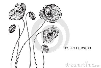 Poppy sketch art stock vector illustration of grayscale 79734995 poppy flowers drawing and sketch with line art royalty free stock image mightylinksfo Image collections