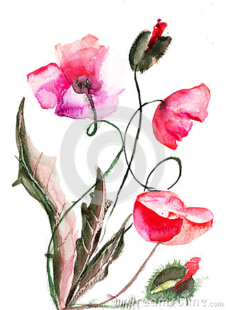 Poppy flowers, watercolor illustration