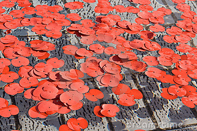 Poppy petals during Silence in the Square event Editorial Photography