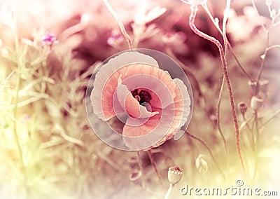 Poppy - vintage card