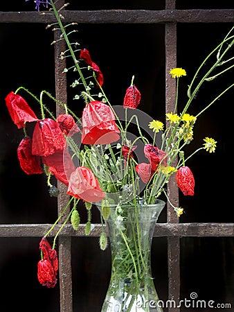 Poppyflowers in a glass vase