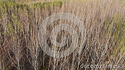Populaire bomen van boven stock videobeelden