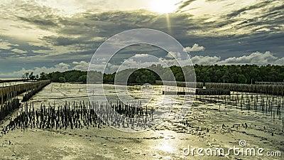 Por do sol atr?s das nuvens As nuvens movem a floresta r?pida dos manguezais durante o per?odo da mar? baixa A linha de bambu imp vídeos de arquivo