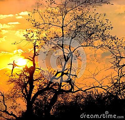 Por do sol em África do Sul