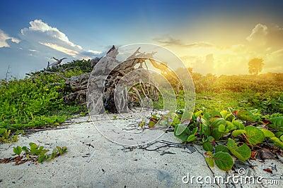 Por do sol na selva de México