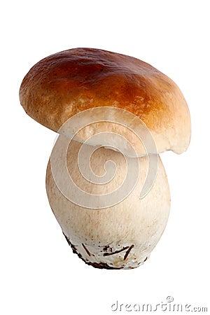Porcini or Boletus Edulis mushroom