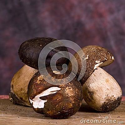 Free Porcini Mushrooms Stock Photos - 11507903