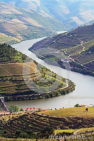 Free Port Wine Vineyards Landscape Stock Photo - 8472630