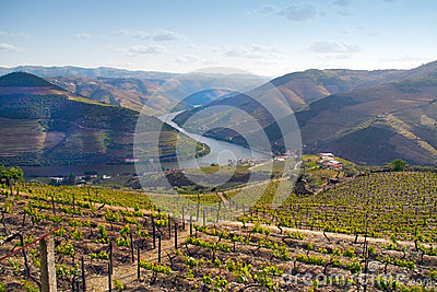 Port wine vineyards landscape