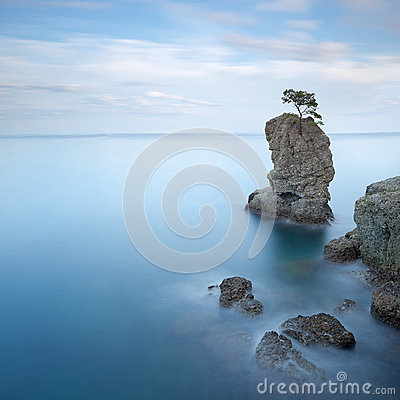 Portofino park. Pine tree rock. Long exposure.