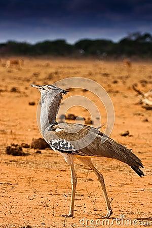 Portrait of an african bird