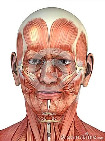 Portrait of anatomical man