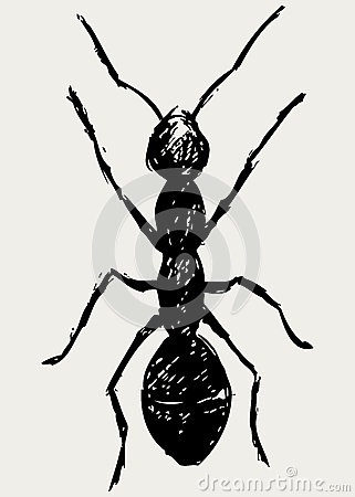Portrait of ant
