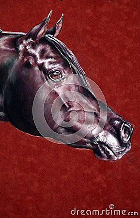 Portrait of the Arab stallion