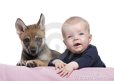 Portrait of baby boy with Young European wolf