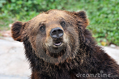 A portrait of a bear