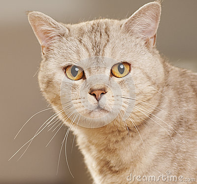 Portrait of beautiful cat