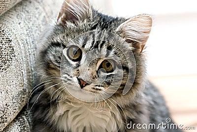 Portrait of a beautiful cat cute adorable kitten
