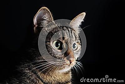 Portrait beautiful cat muzzle isolated