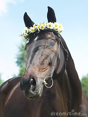 Portrait of beautiful mare with daisys