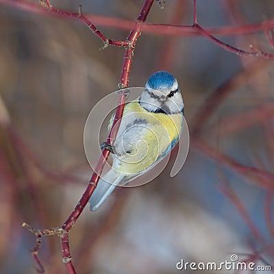 Bird glance