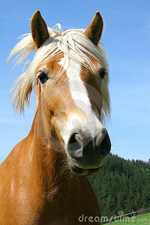 Portrait of brown horse