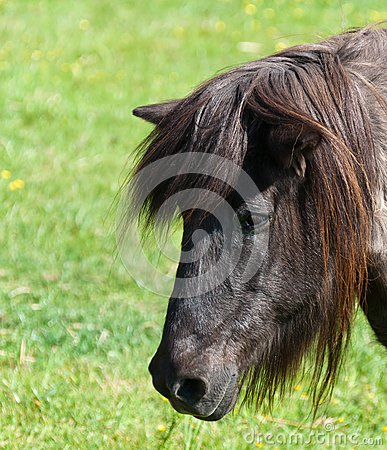 Portrait of a brown horse in a meadow