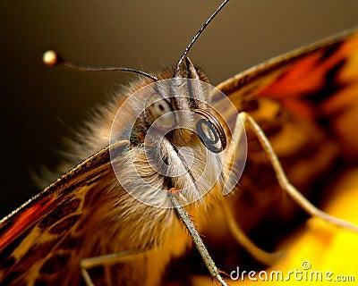 Portrait of a butterfly