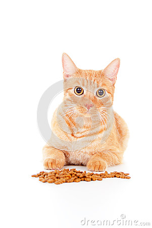 Portrait of a cat with feed
