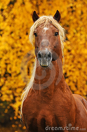 Portrait of chestnut horse in autumn