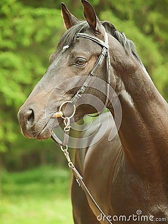 Portrait of  cute breed stallion around pine