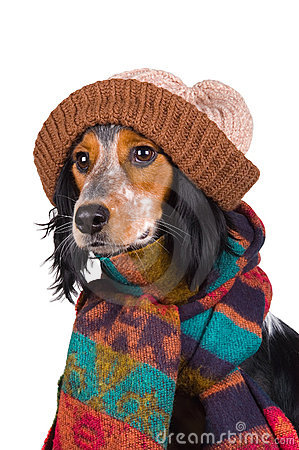 Portrait of cute dog with hat