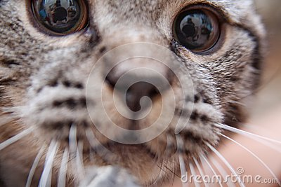 Portrait of cute kitten