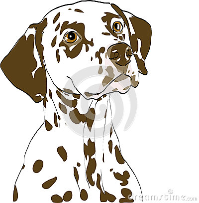 Portrait of dalmatian bitch, liver spotted