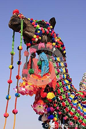 portrait-decorated-camel-jaisalmer-india