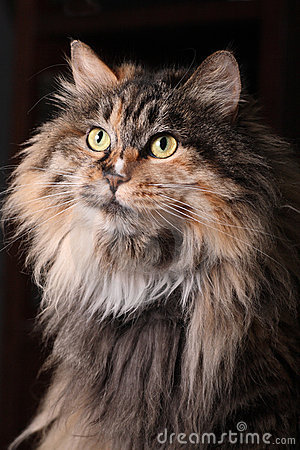 Portrait der Katze.