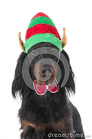Portrait dog for Christmas