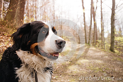 Portrait of dog in the forest, sunshine, vintage Stock Photo