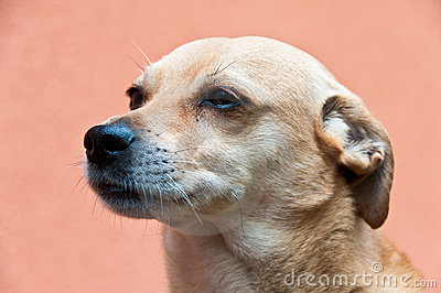 Portrait of a dog listening carefully