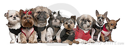 Portrait of dogs dressed up