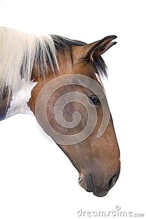 Portrait eines Pferds
