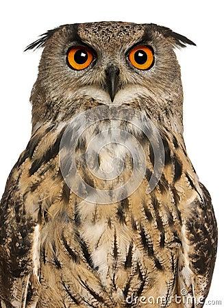 Portrait of Eurasian Eagle-Owl