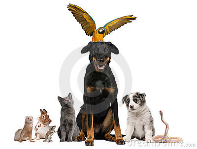 Portrait of group of pets in front of white
