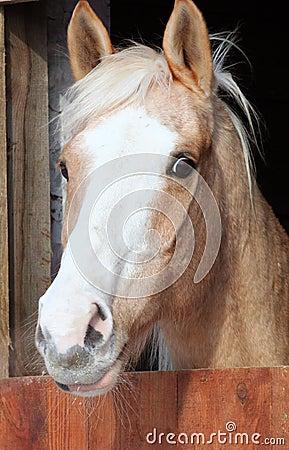 Portrait horse