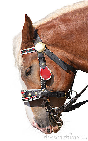 Portrait of horse in bridle
