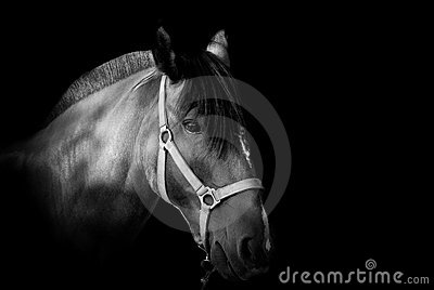 Portrait of a horse on dark background