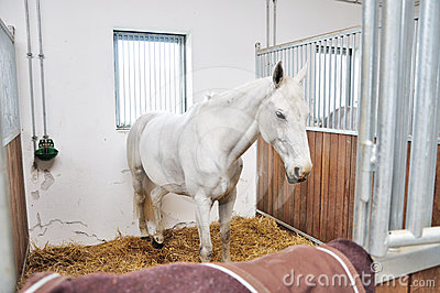 A portrait of horse in stable behind cage
