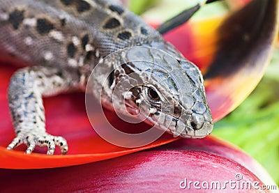 Portrait of lizards