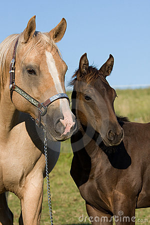 Portrait of mare with foal