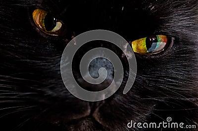 Portrait of the muzzle of a black cat